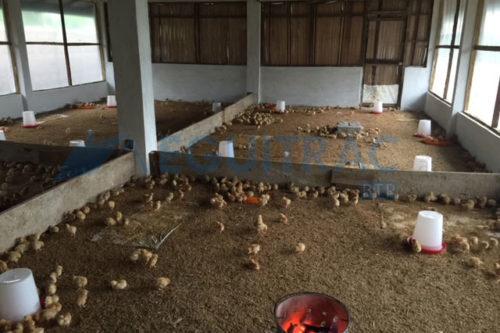 Construction et mise en route d'une ferme avicole